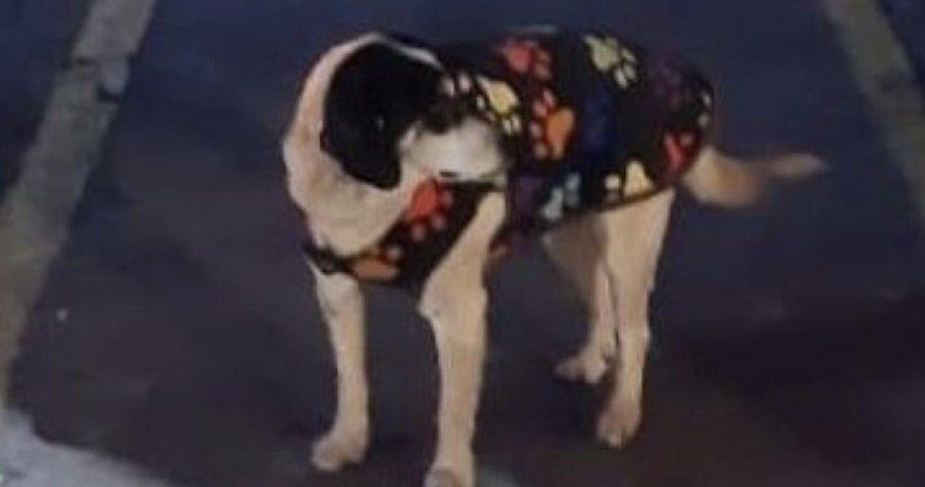 La imagen donde se reconoció al perro es una donde aparece comiendo pastel de choclo, aunque en un primer momento se pensó que era pizza.