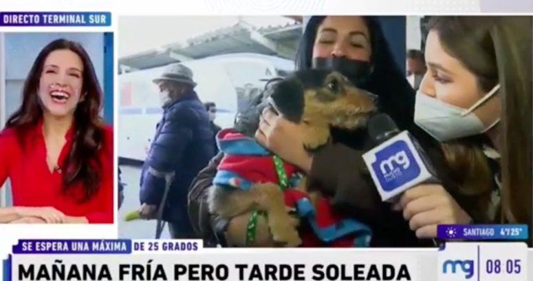 VIDEO – El chascarro que sufrió notera del Mucho Gusto al intentar entrevistar a un perro