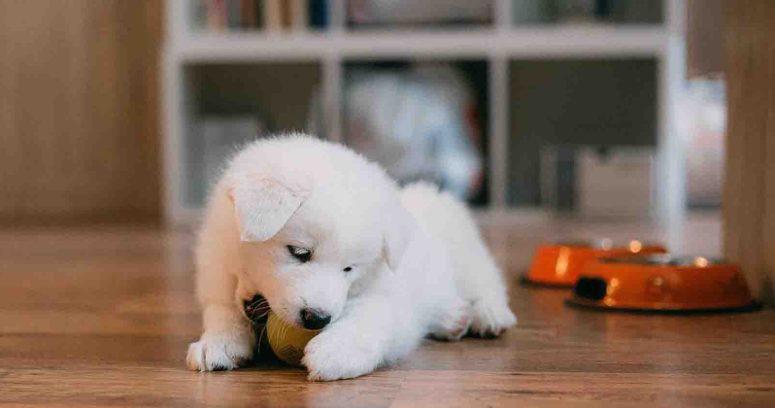 Pet Shop: una tendencia que se instala en Chile
