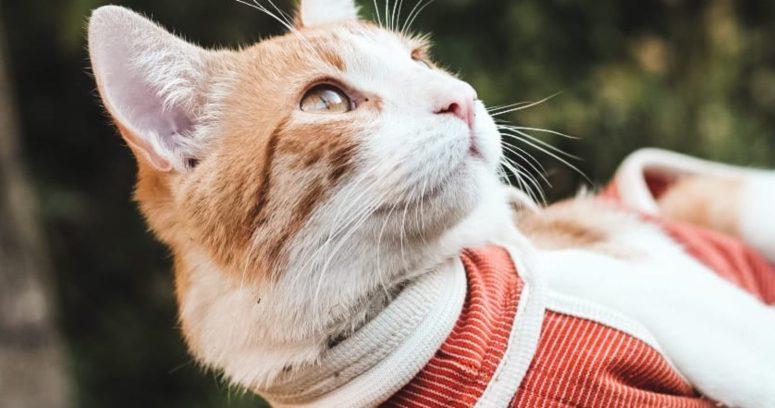 Startup chilena posiciona el BodyCobre postquirúrgico para mascotas en 7 países